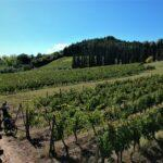 Cycling-in-the-middle-of-Chianti-vineyard-scaled.jpg