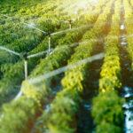 irrigazione_mecav.jpg